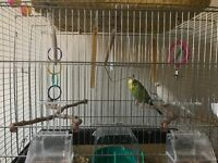 budgies and accessories