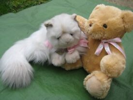 Brand New Ever So Cuddly Cat and Teddy Bear Soft Toys - 2 for ONLY £5.00