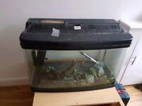 Interpet Fishtank 120l + extras