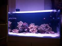 Marine Aquarium / Salt water Fish Tank