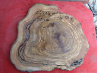 Olive wood roundel ,a slice off a log, RBO4