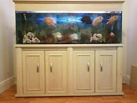 Fish tank with tropical fishes and accessories
