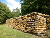 Large trailer load of seasoned chestnut logs for wood burners and fire pits