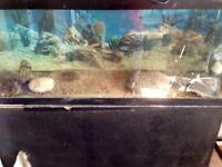 45 gallon reptile or fish tank