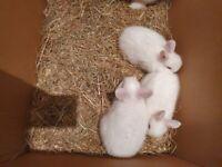 3 bunny rabbits