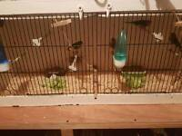 5 birds, Linnets with cage
