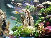 Fish tank contents for sale