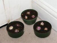 bowls of hyacinth bulbs £5 a bowl