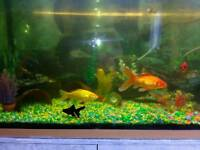 Fish tank and contents