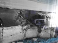 LARGE TANK + TURTLE £50 - FILTER, GRAVEL, AIRPUMP, ORNAMENTS INCLUDED