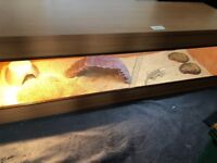Bearded Dragon, cage and other essentials