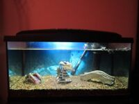 Aquariam with stand/cupboard