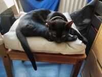 Small Black Cat Missing Longwell Green Area