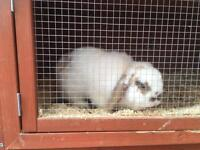 Girl lop rabbit