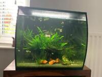 Fluval Aquarium with fish