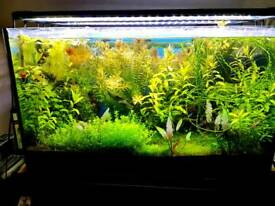 Fish tank light