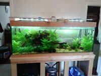 Juwel 450 litre aquarium and stand and accesories
