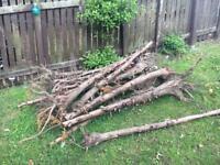 FREE Bush stumps