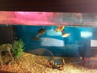 Tropical Fish Tank 3ft