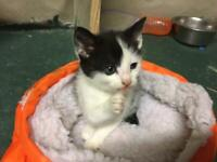 Beautifully Marked Kittens For Sale