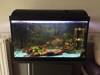 Tropical Fish + Fishtank 24 inch x 12