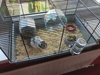 Male hamster with cage and food