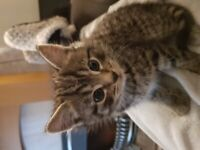Kittens currently reserved