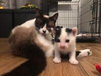 3 little boy kittens