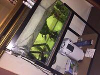 Aquarium complete tank with FREE FISH 200l