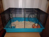 Dwarf Russian Hamster + Cage + Accessories