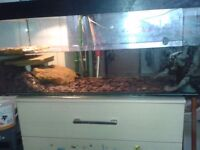 Two Map Turtles for sale, includes tank, pump and basking light