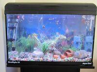 Aquarium, stand, accessories & fish