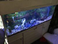 150 L fish tank+ fish sale£150