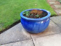 Garden Plants and Pots. Compost/Garden Bin.