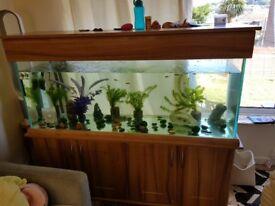 Aqua Oak 150cm Aquarium - Price reduced now £750