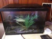2 aquariums for £40
