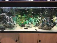 400 litre tropical fish set up