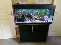 Aqua one fish tank aquarium 170 litres