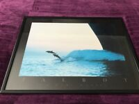 Dolphin Framed Art (2 x Talbot Pictures)