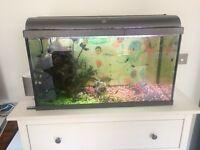 31.5 Inch Aquarium Fish Tank - Tropical Fish with Fish and Fish Food!