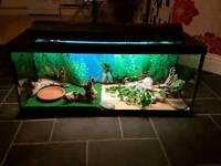 Fish/reptile tank