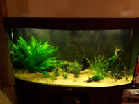 Tropical Fish free to good home (Please read)