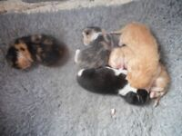lovely little kittens.