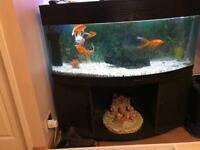 4ft bow fronted fish tank