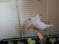 2 zebra finches male and female