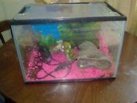 Fish Aquarium with all equipment so ready to go asap.