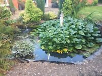 pond plants free to collect
