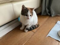 Kitten - Reserved