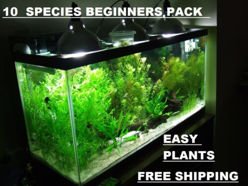 10 DIFERENT SPECIES 50+ stems FULL 30g planted tank easy beginner aquarium