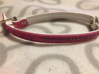 Pink and white buckle dog collar
